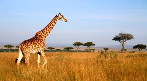 Le località principali del Kenya